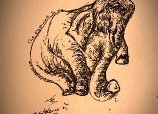 Elephant drawing #2