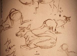 Pencil sketch – Animals