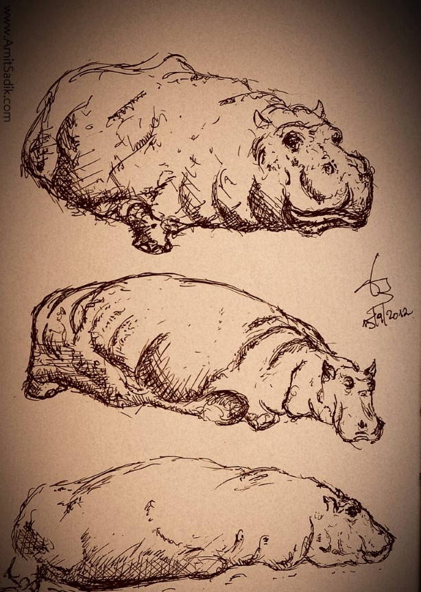 hippo drawing