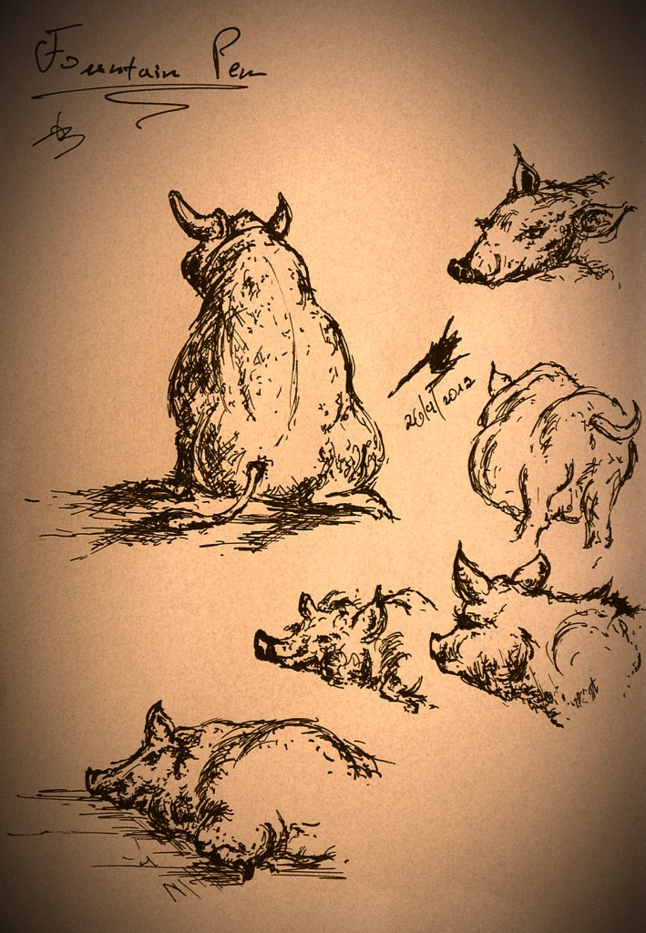 drawing of a pig